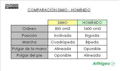 MANO SIMIO - MANO HOMINIDO